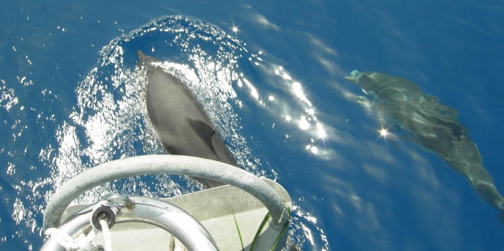 Delfini durante la vacanza in barca vela