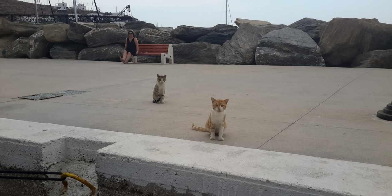 Gatti di Loutra Kythnos